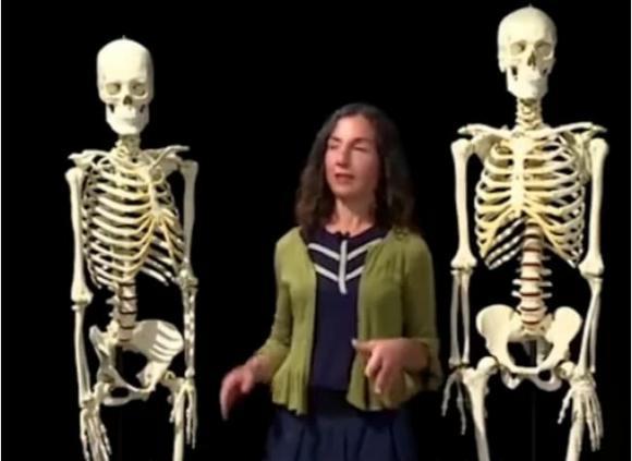 cấu tạo xương người, sự khác nhau giữa châu á và châu âu, xương người 204 chiếc, chuyện lạ