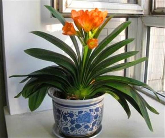 Hãy trồng 4 loại hoa này vào tháng 9 để thưởng thức hoa suốt mùa đông, bởi chúng chịu lạnh tốt và hoa nở rất đẹp