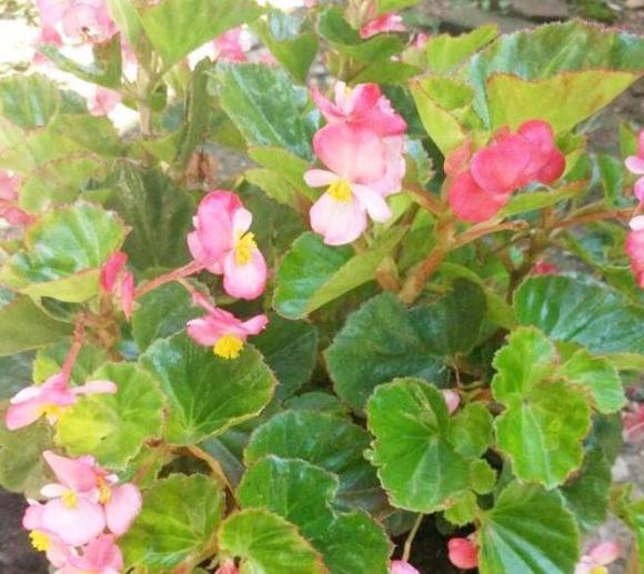 cây cảnh, hoa, chăm sóc cây, loại cây không phun nước lên lá