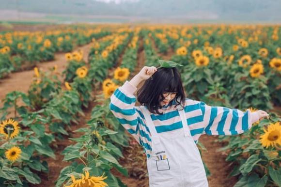 cánh đồng hoa hướng dương, cánh đồng hướng dương ở nghệ an, điểm du lịch đẹp