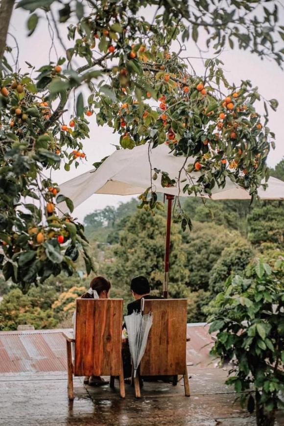 du lịch Đà Lạt, quá cà phê đẹp ở Đà Lạt, địa điểm du lịch ở Đà Lạt