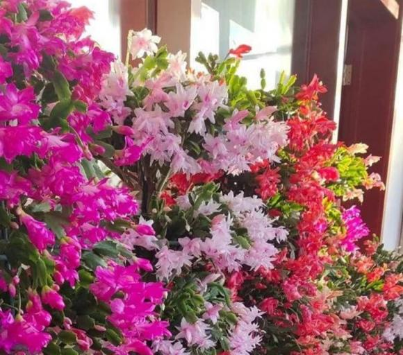 cây hoa, cây cảnh, cây nhiều hoa,