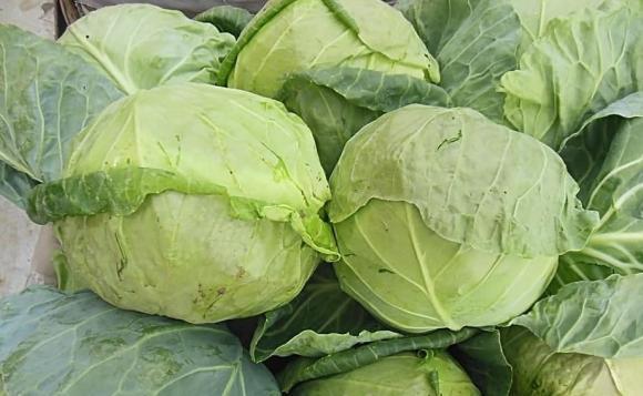 rau bắp cải, thực phẩm cấm kị, cấm kị khi ăn rau bắp cải
