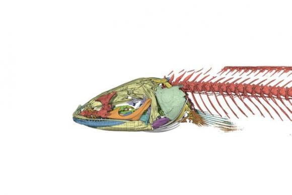 cá lạ, chuyện lạ, cá dưới lòng đất, ấn độ