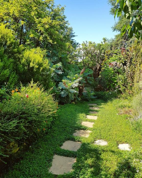 chăm vườn, chăm sóc vườn nhà, cô giáo Thảo