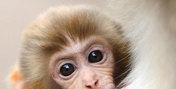 tuổi thân, tuổi khỉ, tử vi
