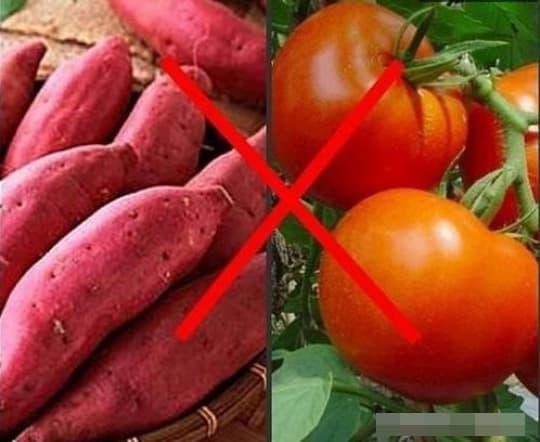 khoai lang, cấm kị khi ăn khoai lang