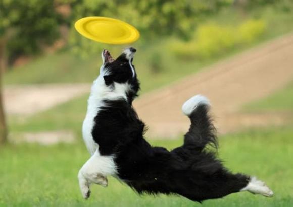 nuôi chó, vật nuôi, chọn chó nuôi trong nhà
