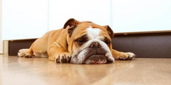 nuôi chó, cho trước khi chết, kinh nghiệm nuôi chó