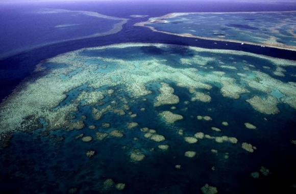 phát hiện rạn san hô khổng lồ cao hơn vincom landmark, phát hiện khoa học, rạn san hô 500m