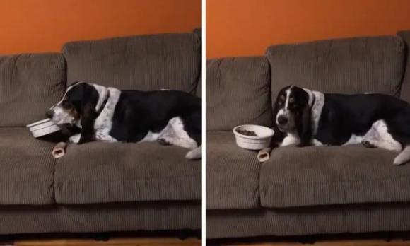 chó cưng, nuôi chó, chó khôn