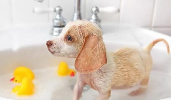nuôi thú cưng, thú cưng, những điều cần biết khi nuôi thú cưng