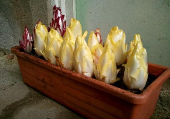 lẩu gà, lẩu gà hoa sen, món ngon từ hoa sen, món ngon từ gà