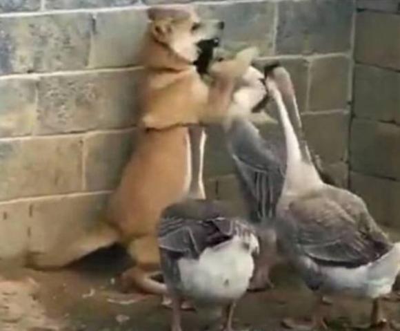 câu chuyện hài hước, câu chuyện thú vị, chú chó đáng thương