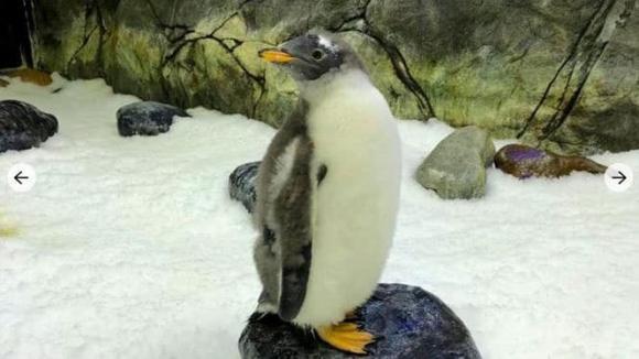chim cánh cụt đồng tính, sphen và magic, đồng tính ở thế giới động vật