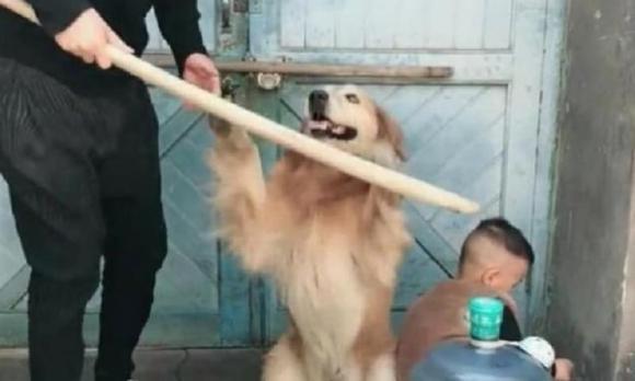 chú chó, nuôi chó, chăm chó