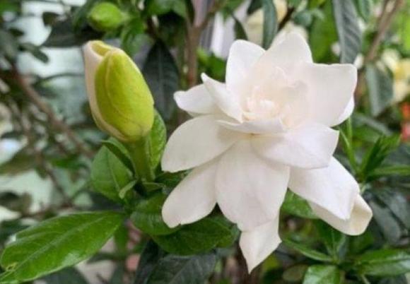 cây cảnh, ban công, trồng hoa