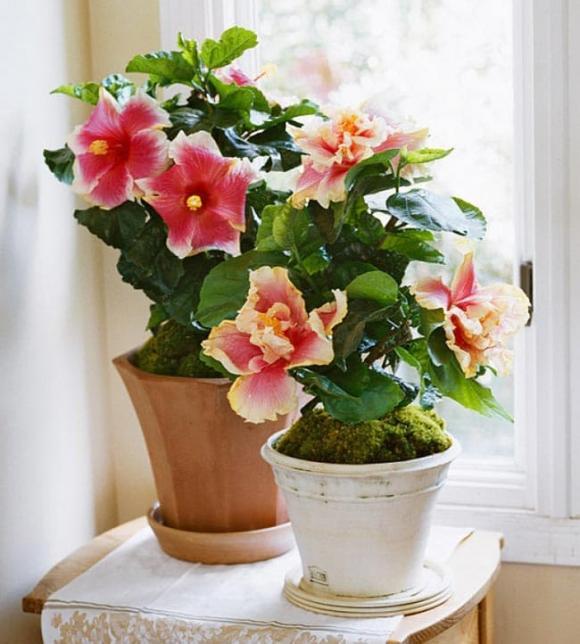 hoa trồng vào mùa xuân, những loài hoa đẹp trồng vào mùa xuân, mùa xuân nên trồng hoa gì