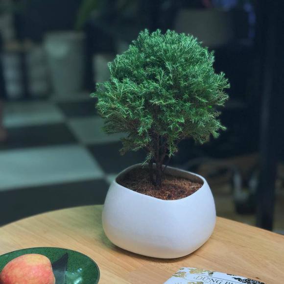 cây phong thủy, cây trừ tà khí, phong thủy nhà