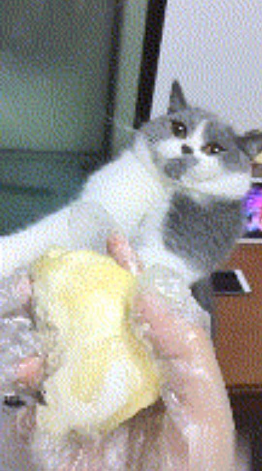 hình ảnh hài hước, mèo ngửi mùi sầu riêng, biểu cảm bất ngờ của chú mèo