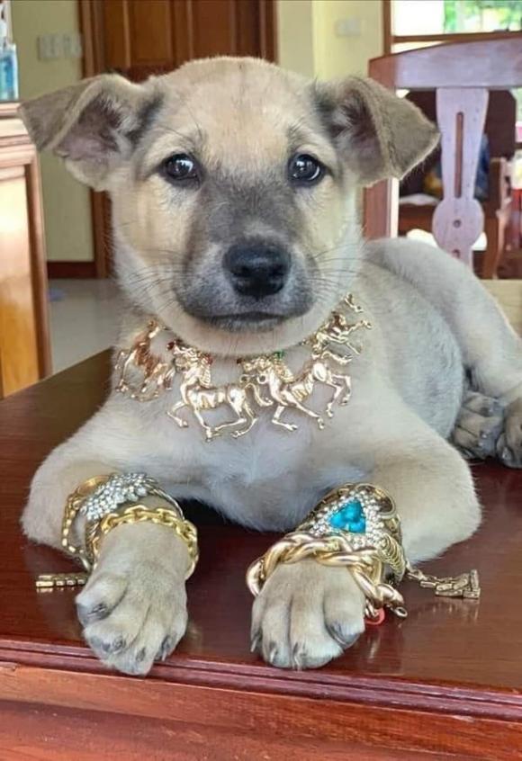 thú cưng, chó, trang sức, làm đẹp đón Tết, đại gia