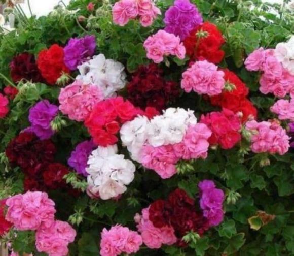 3 loại hoa thích hợp nhất cho người mới trồng, hoa đẹp, những loại hoa đẹp dễ trồng