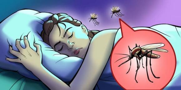 muỗi đốt, cánh phòng muỗi đốt, kiến thức