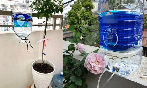 bột giặt, trồng cây, cây cảnh, chăm sóc cây