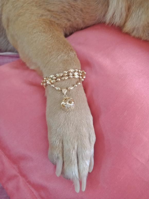thú cưng, chó, động vật, ngày thần tài, vàng bạc