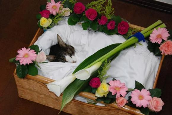 cá koi, tang lễ, làm đám tang cho vật nuôi, tang lễ cho vật nuôi, chuyện lạ