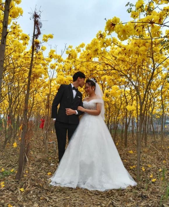 hoa chuông vàng, Bắc Giang, checkin,  Nam Mỹ