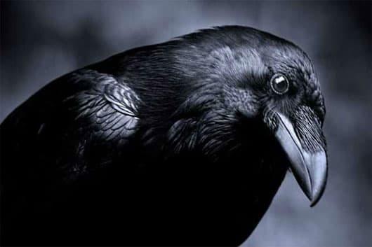 Phong thủy nhà, con vật đen đủi, tai họa