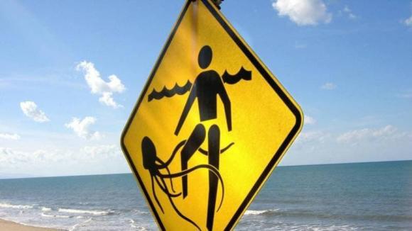 sứa hộp, tai nạn, tử vong