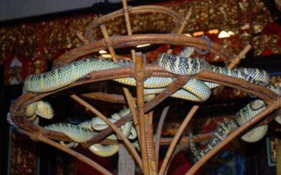 chùa nổi tiếng, chùa rắn, rắn lục, chuyện lạ