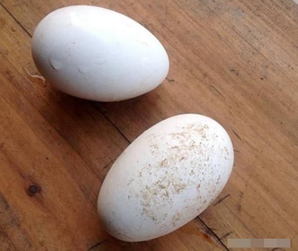 trứng, trứng vịt, trứng gà, trứng ngỗng, trứng chim bồ câu, trứng cút