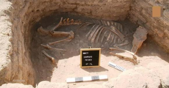 khảo cổ, ai cập, khai quật