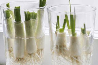 trồng cây, trồng cây trong nhà, trồng cây gia vị