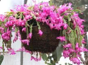 chăm sóc cây cảnh, cách trồng hoa đúng cách, lưu ý khi trồng hoa