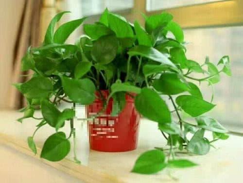 mẹo hay cuộc sống, cách trồng cây cảnh, cách xử lý khi lá cây bị vàng
