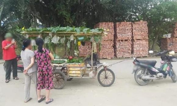 nghệ thuật bán hàng,  marketing, trồng rau sạch