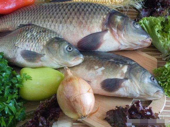 ăn cá, ai không nên ăn cá, bệnh xơ gan, lao, gút