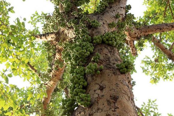 cây phong thủy, phong thủy nhà, loại cây hút  tài lộc