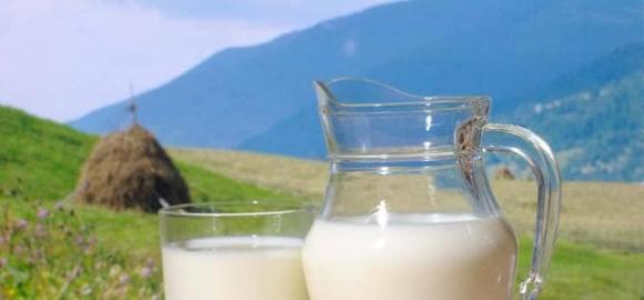 sữa, thực phẩm kị nhau