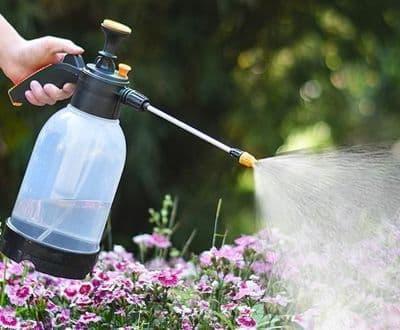 trồng hoa vào mùa hè, chăm sóc hoa, lưu ý khi trồng hoa vào mùa hè