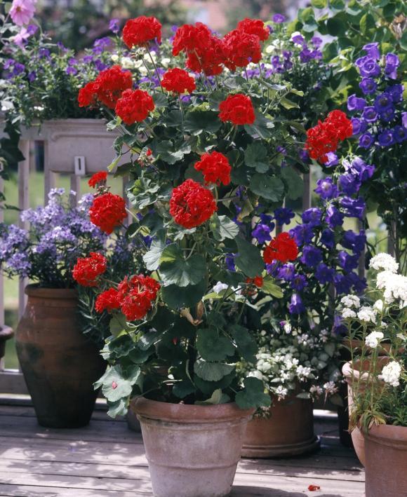 thời điểm để giâm cành hoa, trồng hoa, lưu ý khi trồng hoa