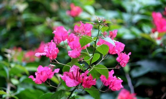 cách trồng hoa đúng cách, lưu ý khi trồng hoa, trồng hoa
