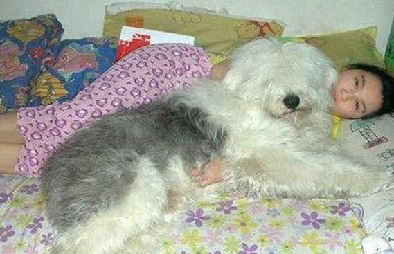 có cưng, bệnh từ vật nuôi, ngủ với chó