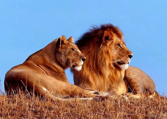giống đực, con được, sự khác nhau giữa người và động vật