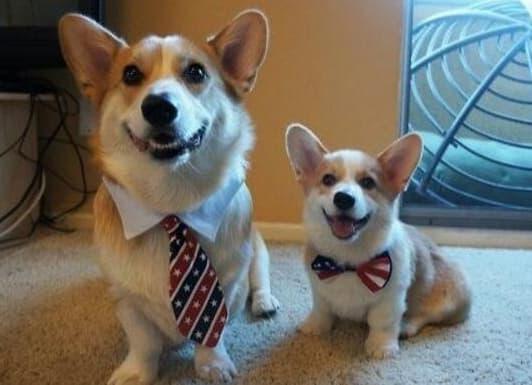 nuôi chó, chó nuôi
