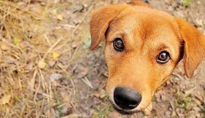 nuôi chó, chó nuôi, chó sợ gì